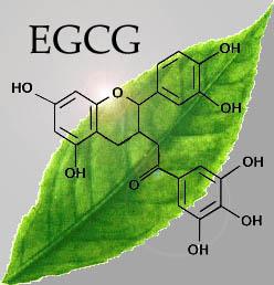 extract ceai verde de slabit